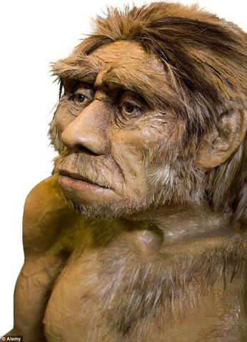 Hacia el Homo Sapiens