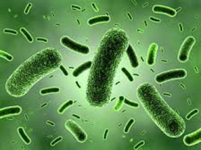Bacterias unicelulares