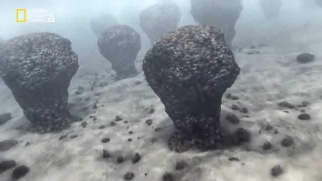 Aparición de los estromatolitos