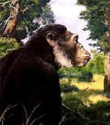 Aparición primates