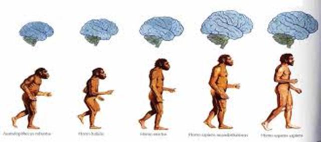 EVOLUCION DEL NEANDERTAL