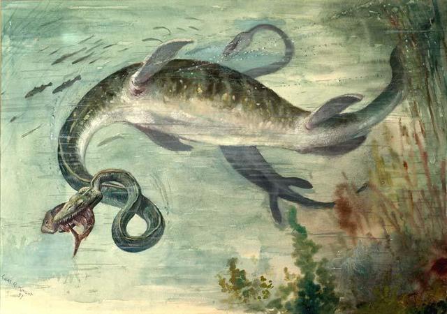 Animales en el Océano Atlántico