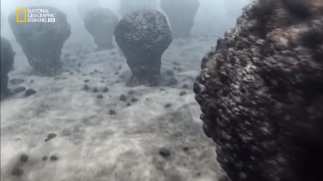 Llegada de los estromatolitos