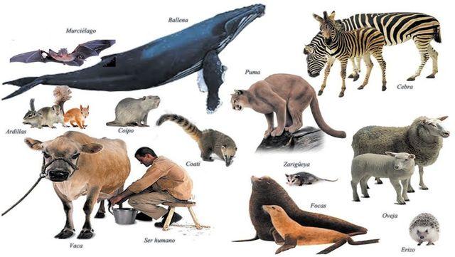 Extinción de los dinosaurios; dominancia de los mamiferos