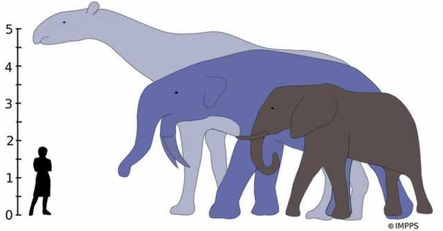 Diversificación edicariana de grandes animales