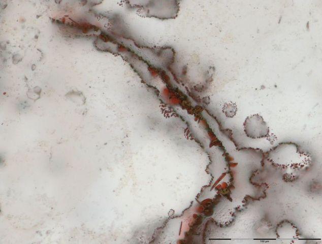 Los fosiles más antiguos de la Tierra