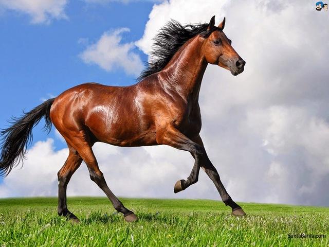 Domesticació del cavall