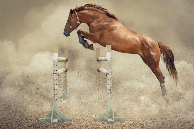 La domesticació del cavall.