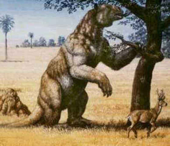 First Giant Sloth