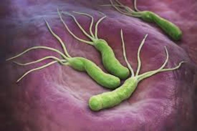 Mal de panxa (Helicobacter Pilory)