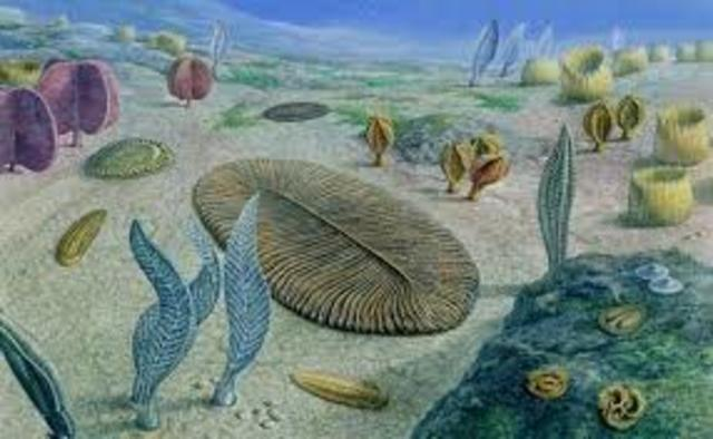 Multicellular Life