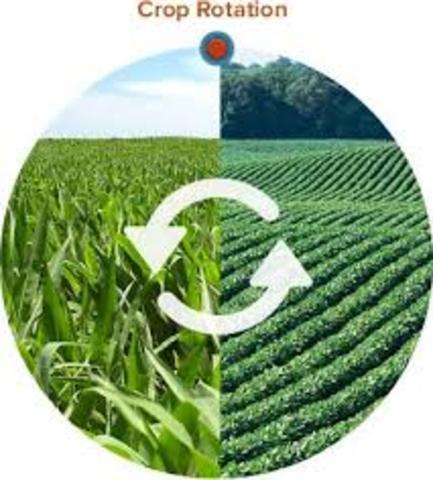 Development of Crop Rotation