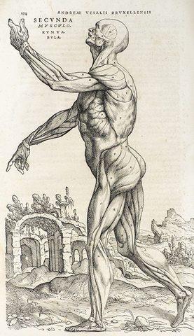 Humanis corporis fabrica