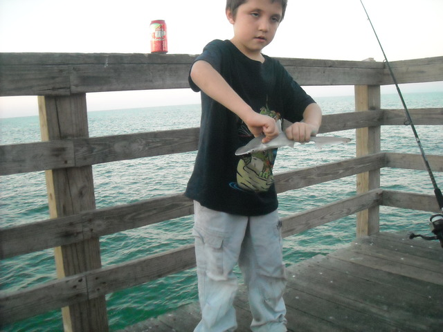 first shark i caught fishing on the pier