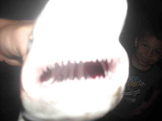 shark i caught has really big teeth second shark i caught this month