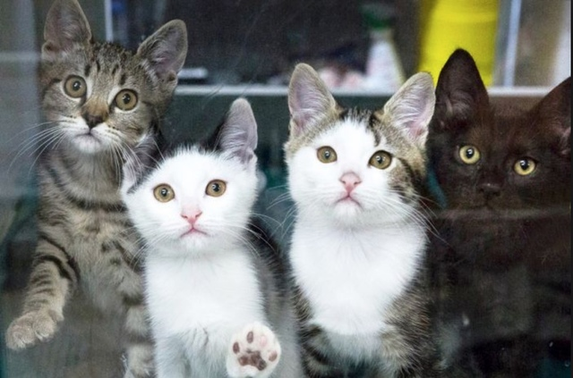 Record number of cat adoptions for WA shelter