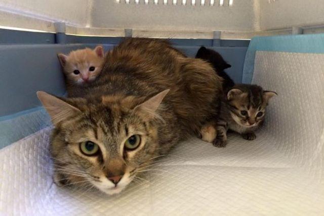 Cat Haven backs new cat laws