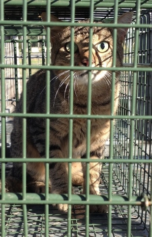 Sterilise cats or face fine, owners told