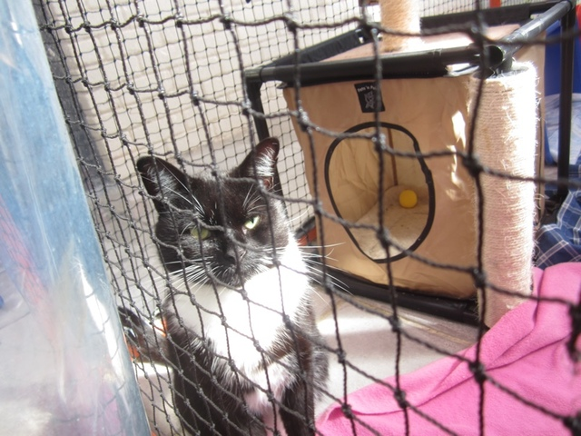 Cat Haven offers few options for cats