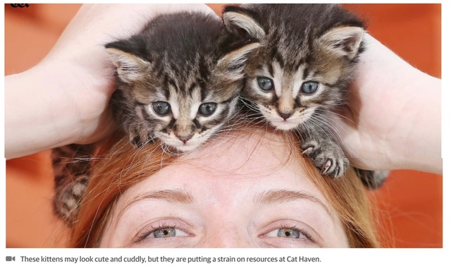 Record cat influx puts strain on haven