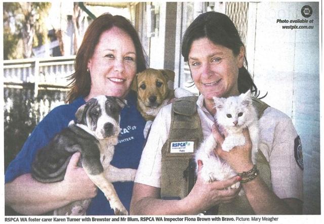 Kalgoorlie-Boulder RSPCA sees spike of cats