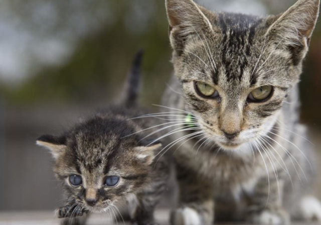 Handouts to help police new cat laws