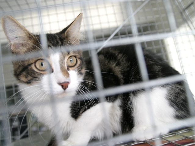 Murray Shire Council supports cat laws