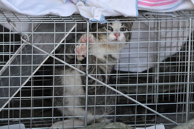 High cost of new cat law