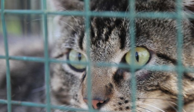 Geraldton Council using cat laws to trap cats