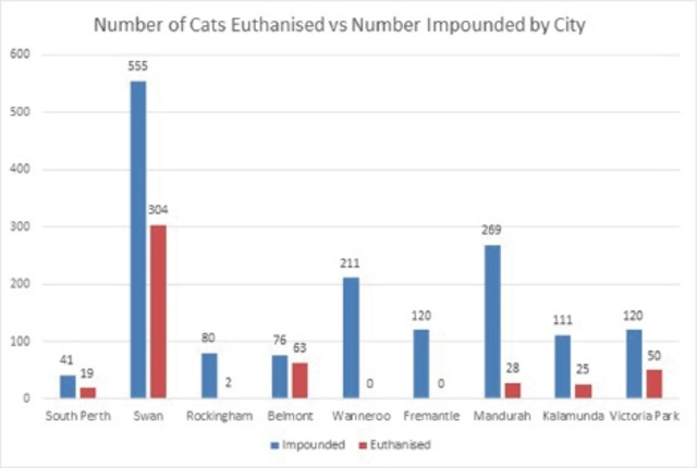 Councils kill up to 80% of cats