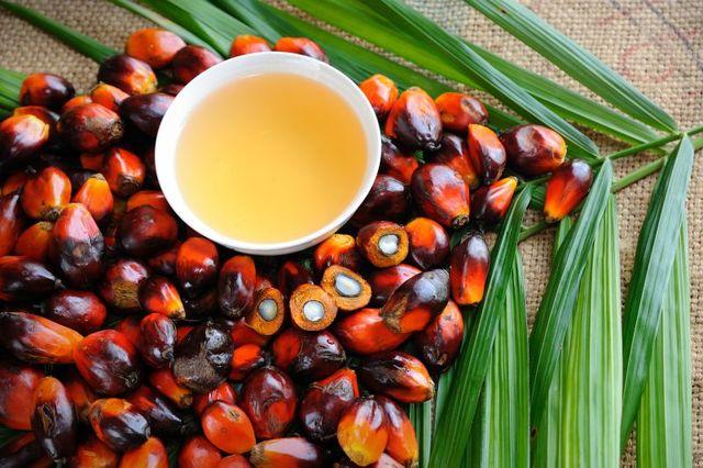 Cadeia do óleo de palma: Mesas de diálogo com empresas da cadeia do óleo de palma