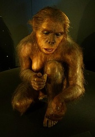 Homo Habilis (Evolution)