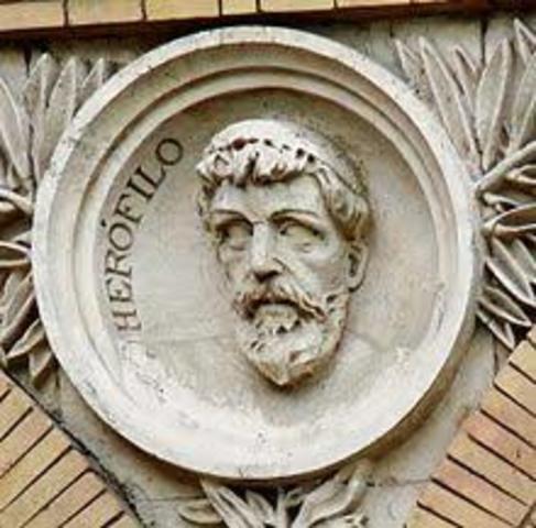Surgió el Fundador de la Anatomía Herófilo