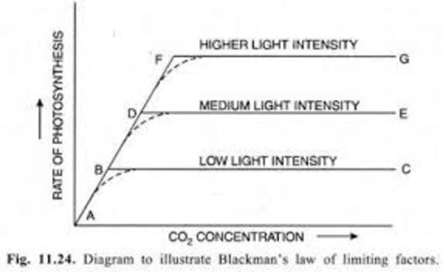 Energy in Plants