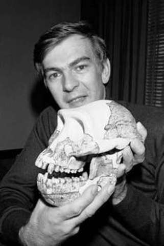 Anthropology/Evolution of Humans