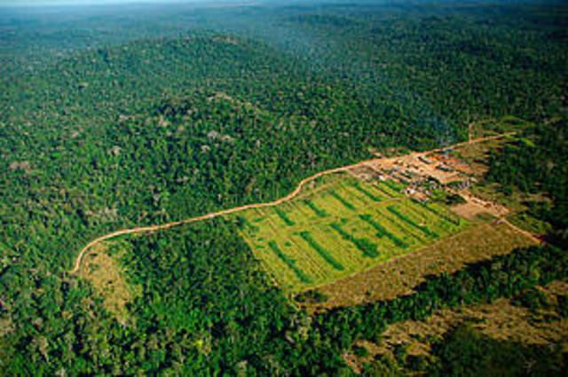 Deforestation in Mato Grosso
