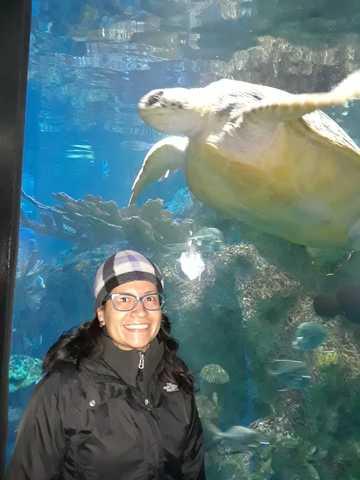 Visitando The New England Aquarium (Boston, US)