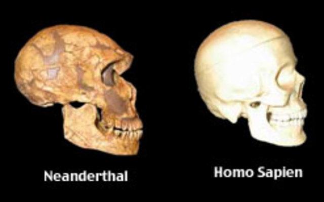 Causes de la desaparició del Homo Neanderthalensis