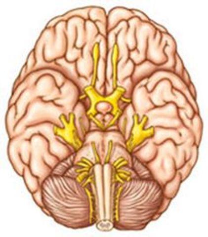 Evaluación Neuropsicológica.