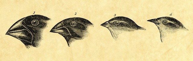 Un postulador de Darwin creo un término llamado 'Darwinismo'