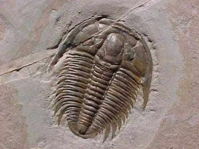 Vertebrates appeared in ocean
