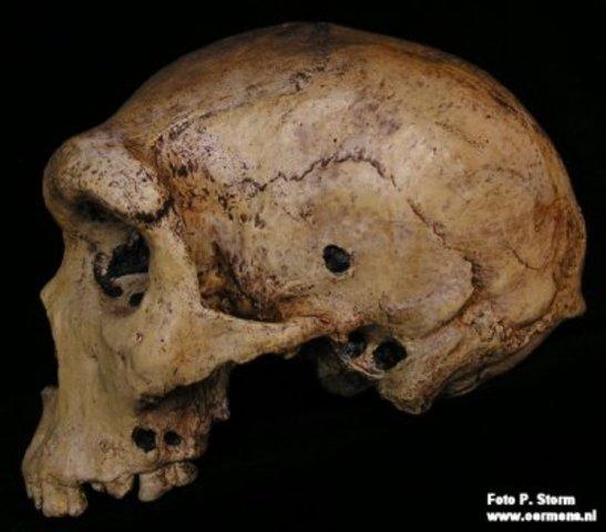 Homo rhodesiensis (entre 300.000 a 125.000 anys)