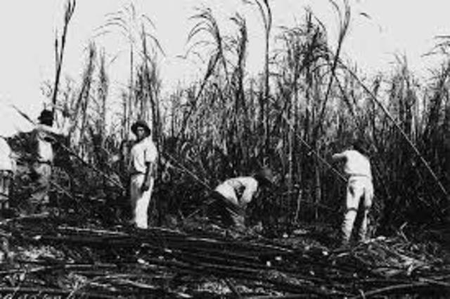 Hawaii Sugar Plantation