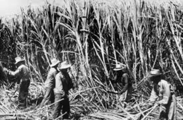 Sugar Plantations (Hawaii)