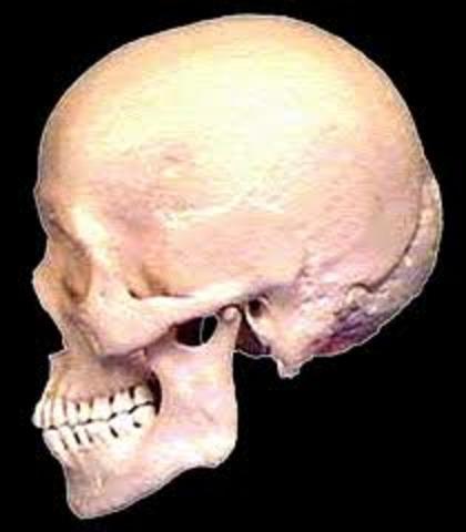 Homo Sapiens (130000 – 90000 anys)