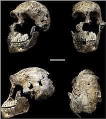 Restes humanes més antigues de la península Ibèrica (homo antecessor)