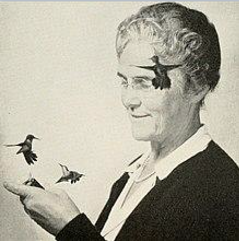 Harold, fotografió colibries en movimiento