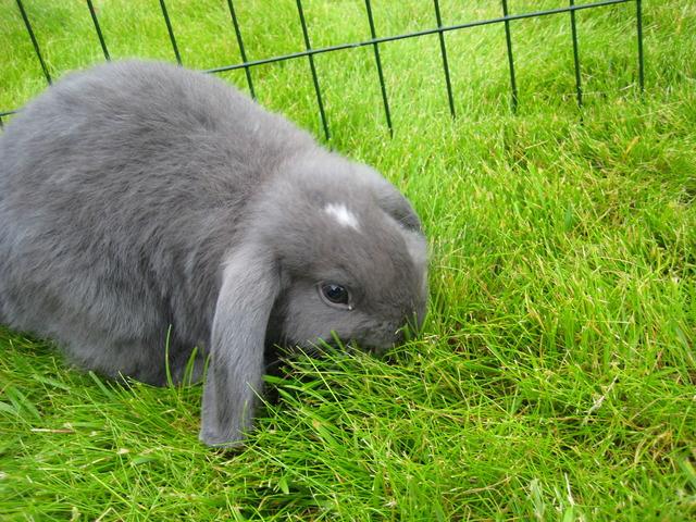 Vi skaffade oss en kanin