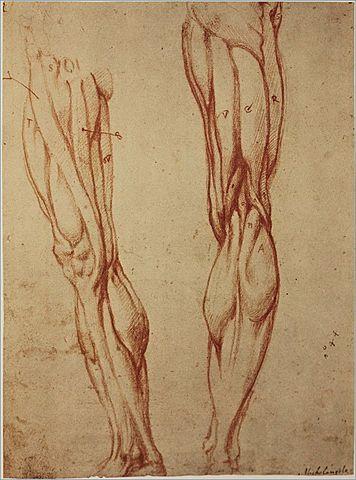 Scientific Discoveries: Human Anatomy