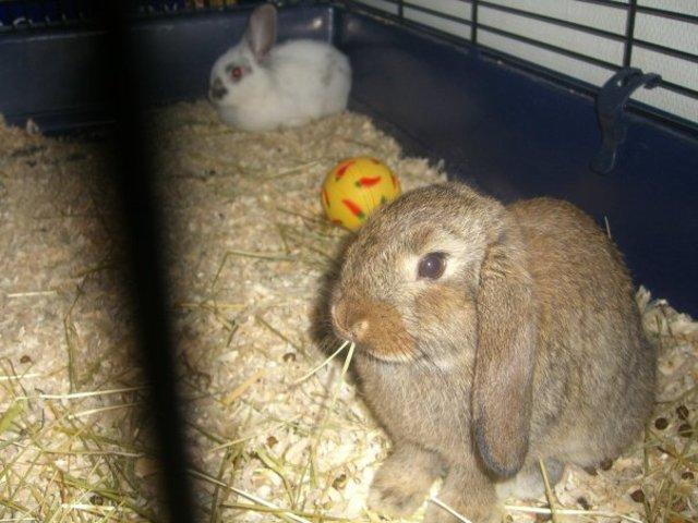 Vi köpte två kaniner!